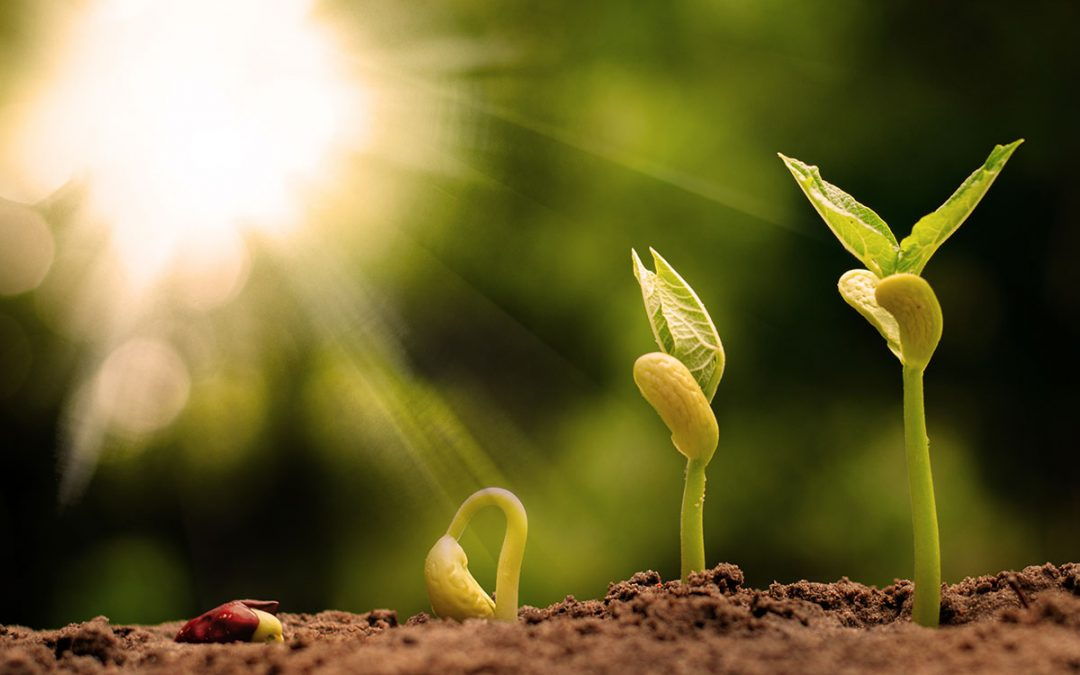 5 Ways to Plant Your Virtual Seeds